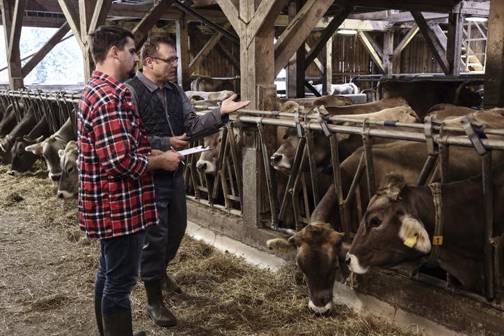 Veterinarian helping farmer with his livestock
